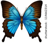 1,abdomen,animal,antenna,antennae,arthropod,background,blue,body,bright,butterfly,diagram,drawing,eyes,head