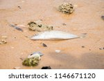 dead fish on the beach. sea... | Shutterstock . vector #1146671120