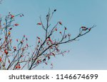 tree with orange leafs and blue ... | Shutterstock . vector #1146674699