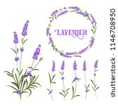 set of lavender flowers... | Shutterstock .eps vector #1146708950