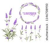set of lavender flowers... | Shutterstock .eps vector #1146708950