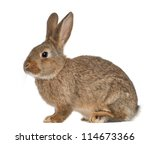 Stock photo rabbit sitting against white background 114673366