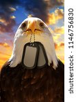 bald eagle holds a dog tags in... | Shutterstock . vector #1146756830
