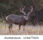 Big Trophy Mule Deer Buck ...