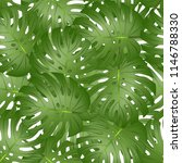 philodendron monstera leaf... | Shutterstock .eps vector #1146788330