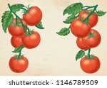 delicious ripe tomatoes in... | Shutterstock .eps vector #1146789509