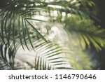 copy space of blur green palm... | Shutterstock . vector #1146790646