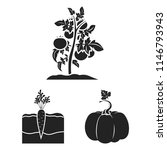 plant  vegetable black icons in ...   Shutterstock .eps vector #1146793943