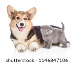 Stock photo corgi puppy with tiny kitten lying together in side view isolated on white background 1146847106