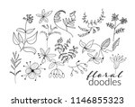 vector collection of botanical... | Shutterstock .eps vector #1146855323