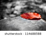 red leaf on black and white... | Shutterstock . vector #114688588