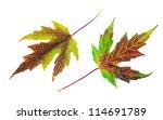 autumn maple leaves on white | Shutterstock . vector #114691789