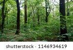 deciduous forest in summer | Shutterstock . vector #1146934619