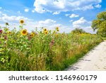nature path on a field with... | Shutterstock . vector #1146960179