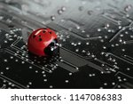 computer bug  failure or error... | Shutterstock . vector #1147086383
