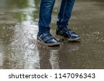 child legs in sneakers close up ...   Shutterstock . vector #1147096343