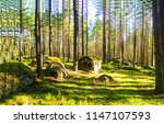 forest trees sunlight... | Shutterstock . vector #1147107593