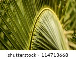 Palm Tree Leaves In Perspective