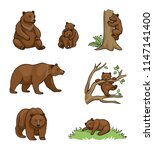 Brown Bears   Udults And Cubs....