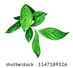 watercolor branch with green... | Shutterstock . vector #1147189526