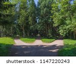 Small photo of The junction, three forest roads converge into one.