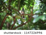 black and white bird   white... | Shutterstock . vector #1147226996