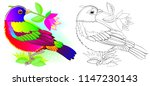 colorful and black and white... | Shutterstock .eps vector #1147230143