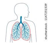 light  respiratory system.... | Shutterstock .eps vector #1147251539