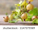 fresh green gooseberries on a... | Shutterstock . vector #1147375589