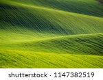 Rolling Hills Of Green Wheat...