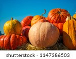 a rustic autumn still life with ... | Shutterstock . vector #1147386503