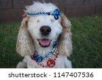 Blind Cocker Spaniel Dog Brings ...
