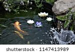 koi swimming in pond with water ... | Shutterstock . vector #1147413989