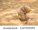 cute dog on the beach. | Shutterstock . vector #1147459499
