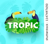word tropic composition with... | Shutterstock .eps vector #1147497650