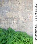 stone wall. green grass.... | Shutterstock . vector #1147513169