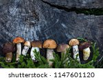 fresh forest mushrooms on a... | Shutterstock . vector #1147601120
