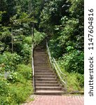 Steps staircase in a forest trees plants landscape jungle stairway