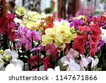 orchids in different colors ...   Shutterstock . vector #1147671866