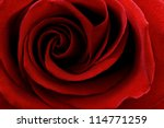 Stock photo beautiful close up red rose 114771259