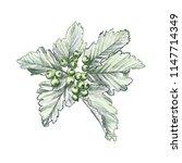 branch of rowan berry sketch ... | Shutterstock .eps vector #1147714349