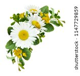 daisy flowers and wild grass in ... | Shutterstock . vector #1147729859