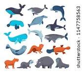 Sea Mammal Vector Water Animal...