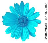cyan flower isolated on white... | Shutterstock . vector #1147870580