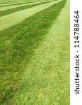 soccer field grass   Shutterstock . vector #114788464