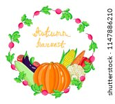 collection  autumn harvest of   ... | Shutterstock .eps vector #1147886210