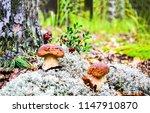mushrooms in forest scene.... | Shutterstock . vector #1147910870