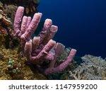 Underwater Close Up Photograph...