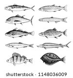 river fish. perch or bass ... | Shutterstock .eps vector #1148036009