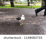 A Photograph Of A Seagull ...